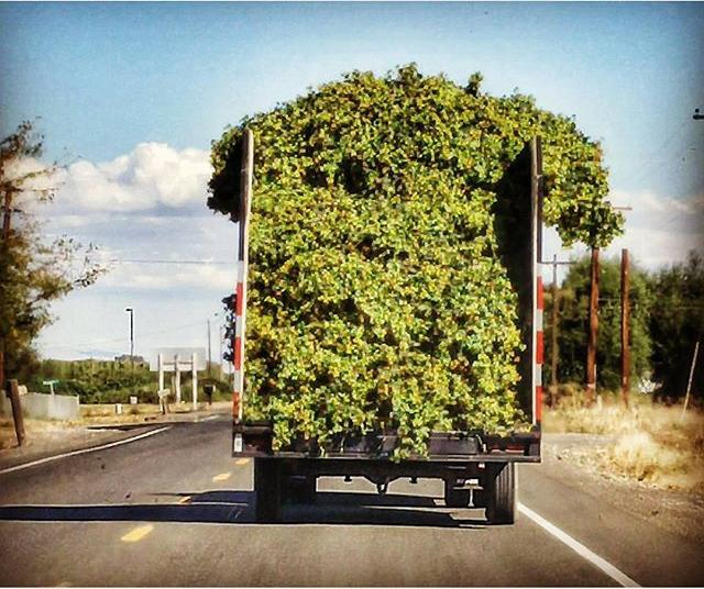 Pretty Sure This Was One Of The Brewers From Hop And Brew School Heading Home