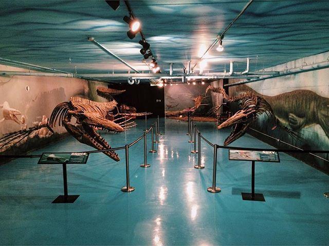 #mosasaur #fossils